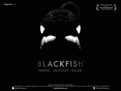 Med filmkamerans hjälp - Blackfish