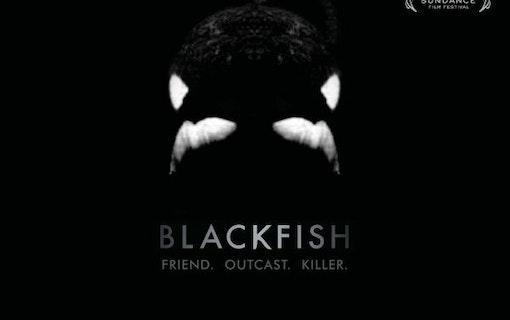 Med filmkamerans hjälp – Blackfish