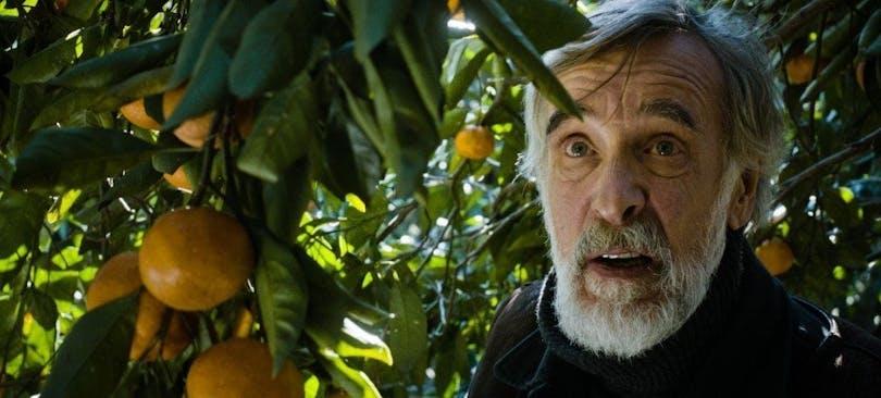 Mandarinodlaren
