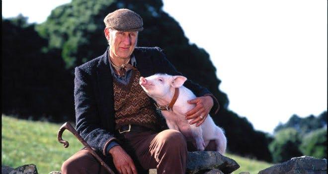 """Stillbild från """"Babe – Den modiga lilla grisen"""""""