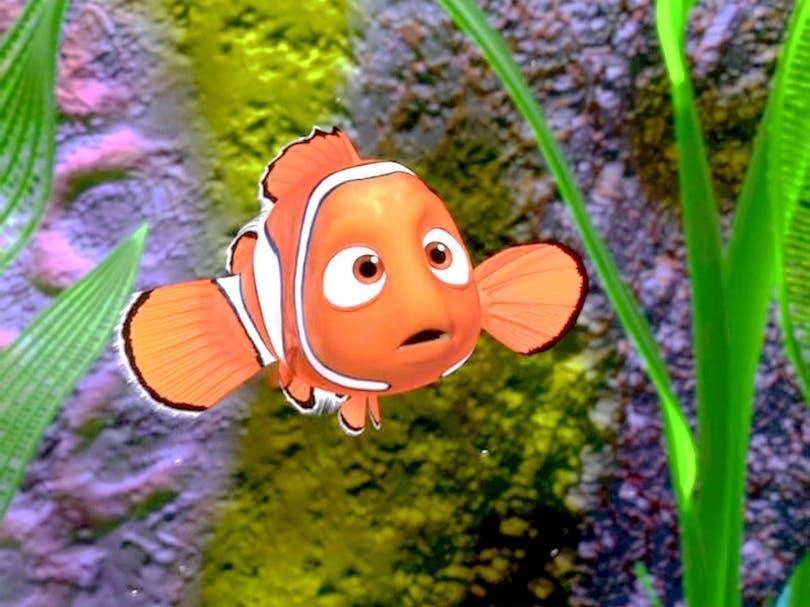 Hitta Nemo - disneyklassiker