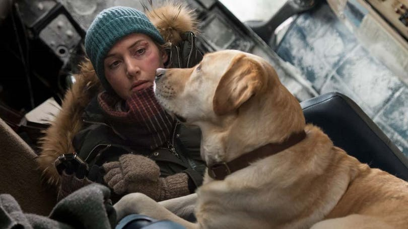 Kate Winslet och hunden Bailay i The Mountain Between