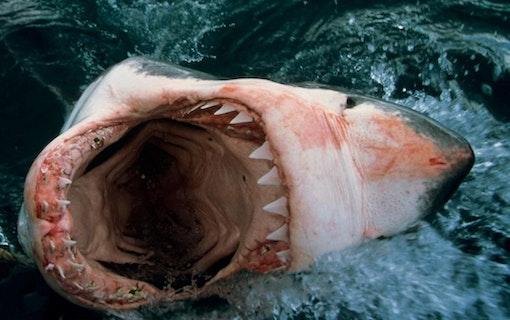 Hajfilmer – Här är tipsen!