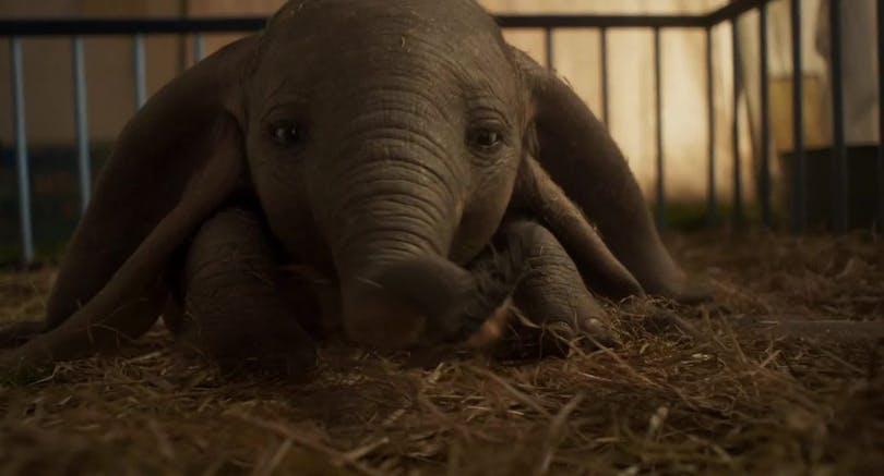 På bilden ser vi Dumbo