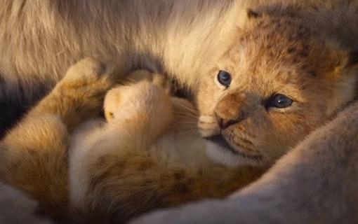 Se läckra bilder på Disneys kommande Lejonkungen