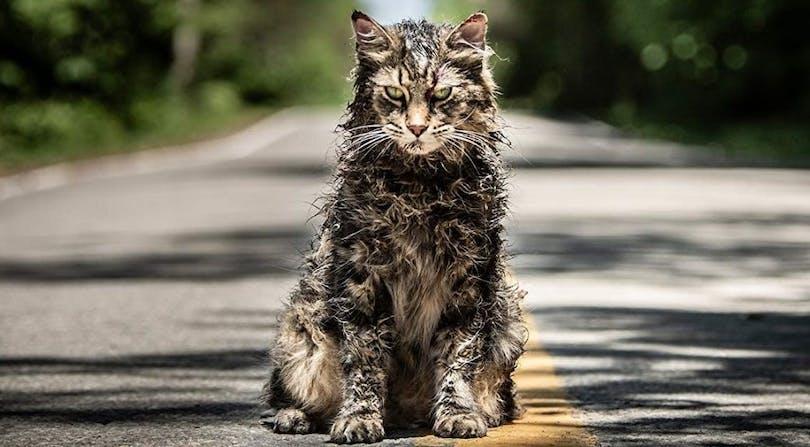 En ond och återuppstådd katt i Pet Sematary.
