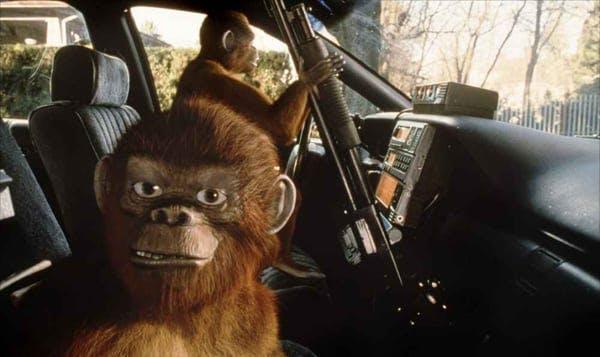 Apor i polisbil