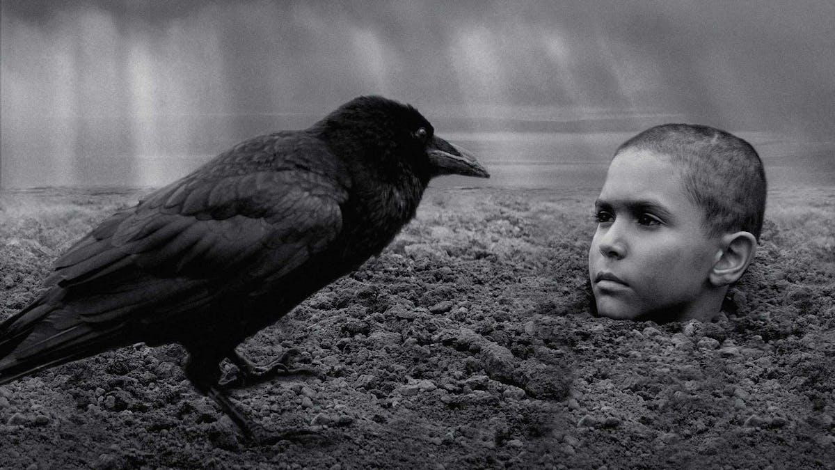 En bild på en ung pojke ur Václav Marhouls The Painted Bird, nedgrävd i marken med bara huvudet bart. En svart kråka syns i förgrunden.