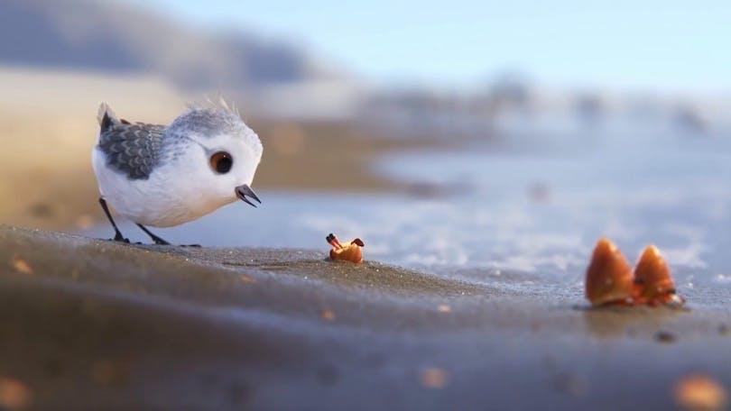 Den söta lilla fågeln på äventyr i kortfilmen Piper