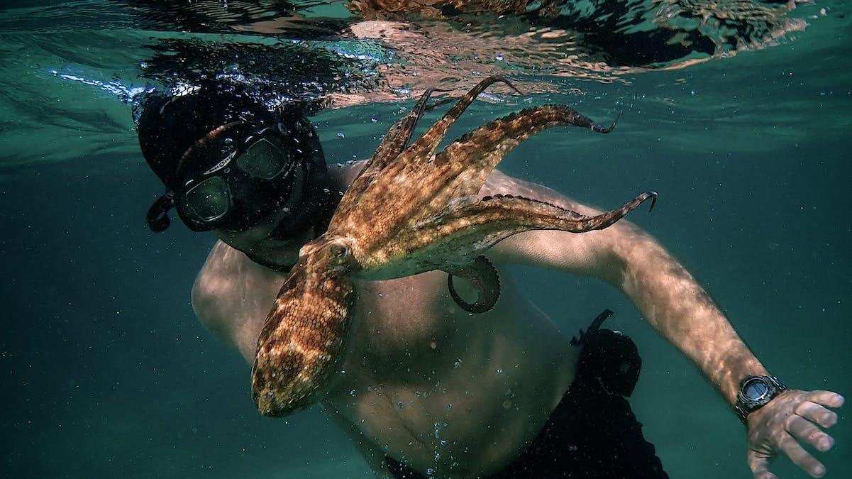 My Octopuss Teacher.