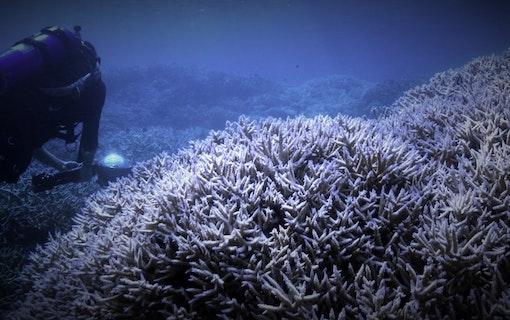 Streama Chasing Coral (2017)